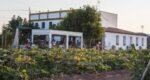 Horchatería Vida en plena huerta de Alboraya