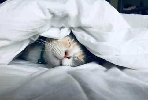 Gato en valenciano