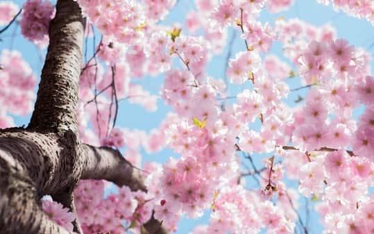 primavera en valenciano